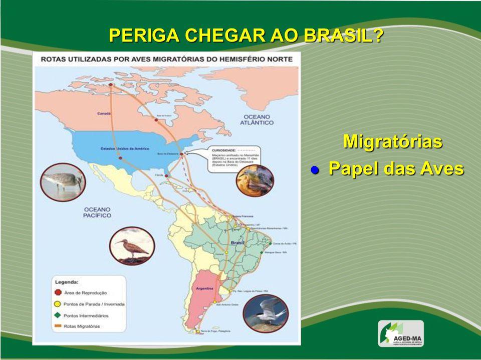 PERIGA CHEGAR AO BRASIL