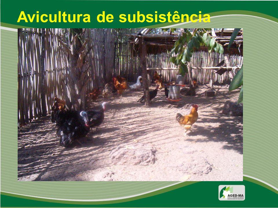 Avicultura de subsistência