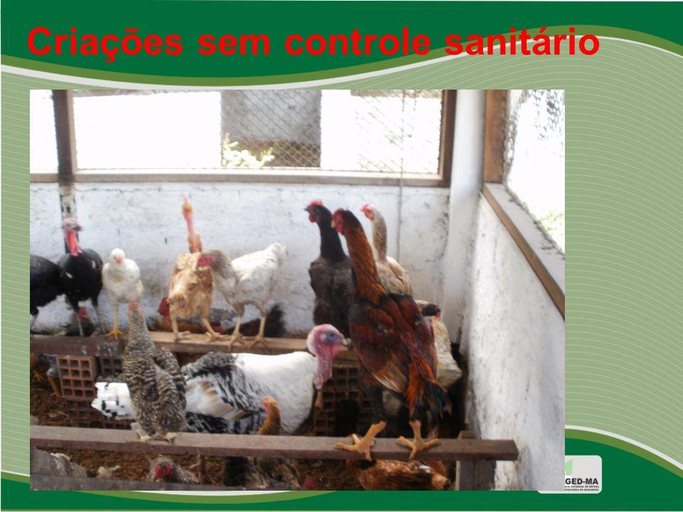 Criações sem controle sanitário