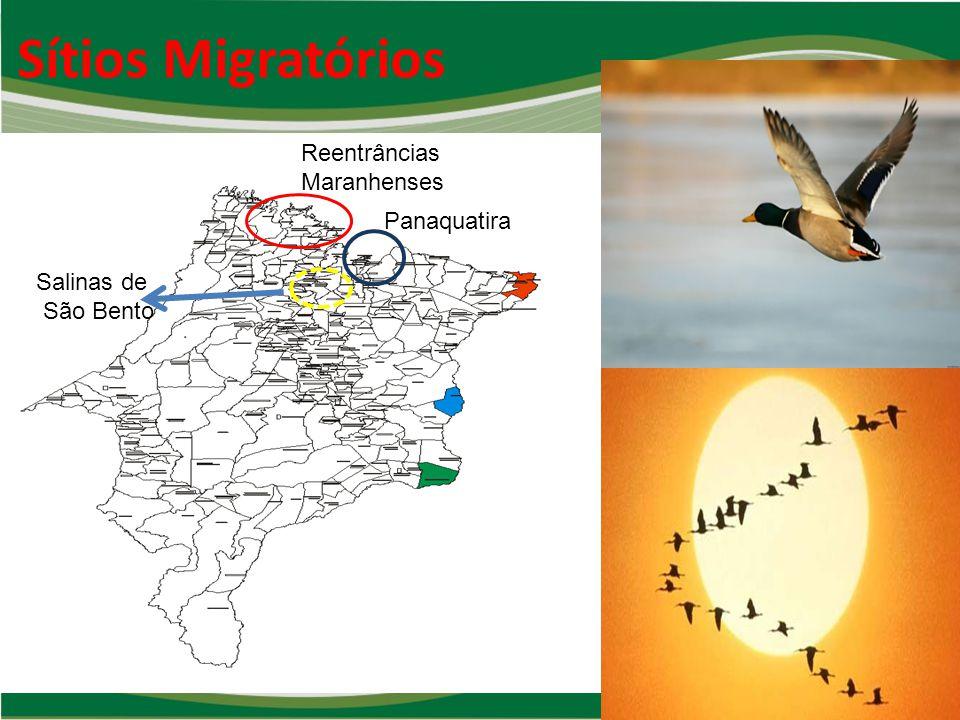 Sítios Migratórios Reentrâncias Maranhenses Panaquatira Salinas de
