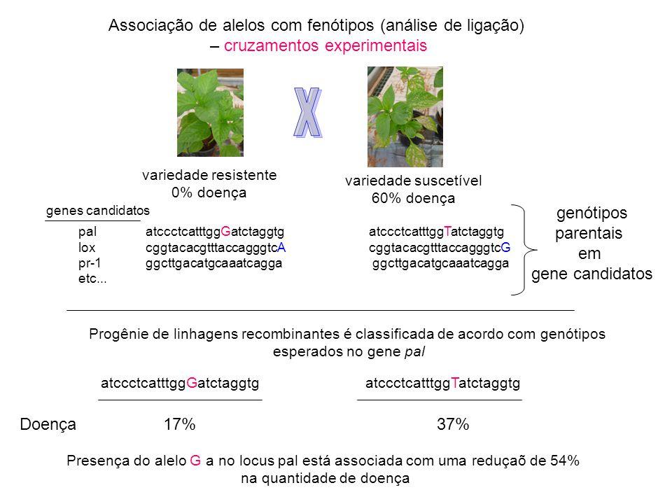 X Associação de alelos com fenótipos (análise de ligação)
