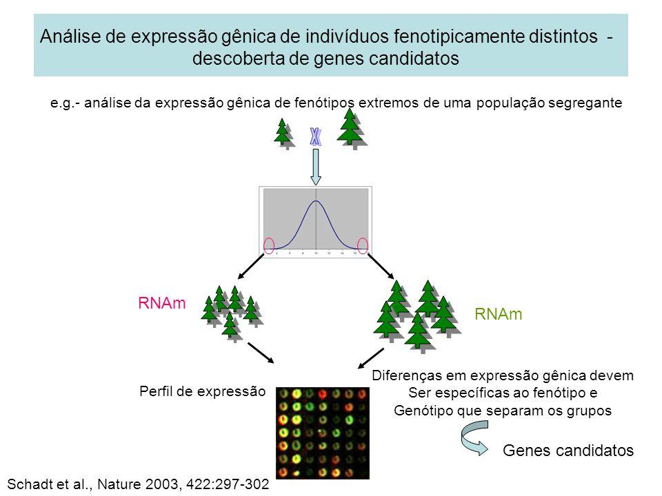 Análise de expressão gênica de indivíduos fenotipicamente distintos - descoberta de genes candidatos