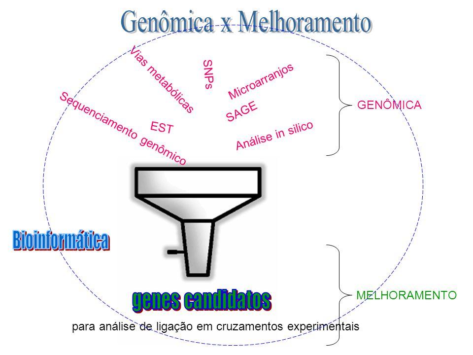 Genômica x Melhoramento