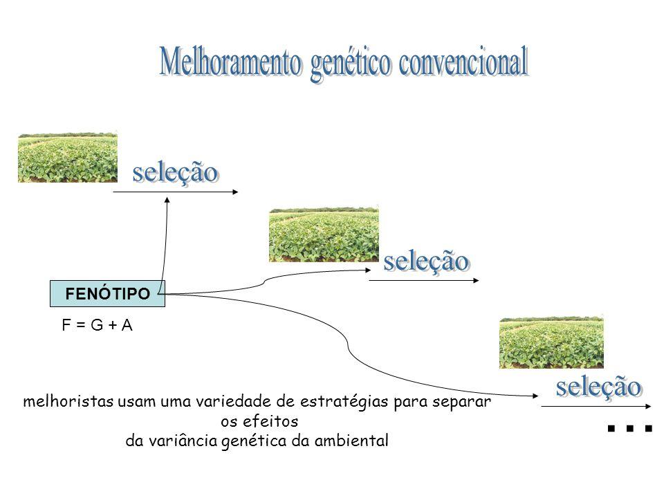 ... Melhoramento genético convencional seleção seleção seleção