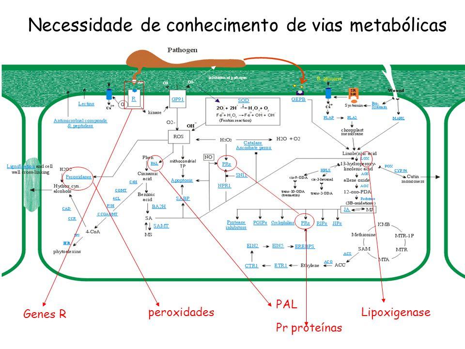 Necessidade de conhecimento de vias metabólicas