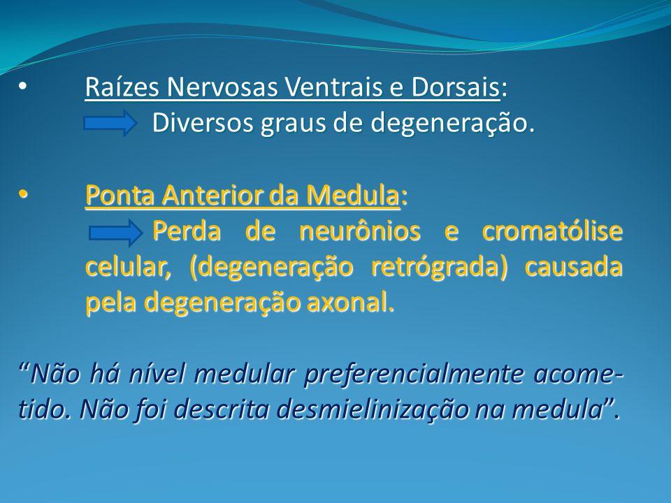Raízes Nervosas Ventrais e Dorsais: