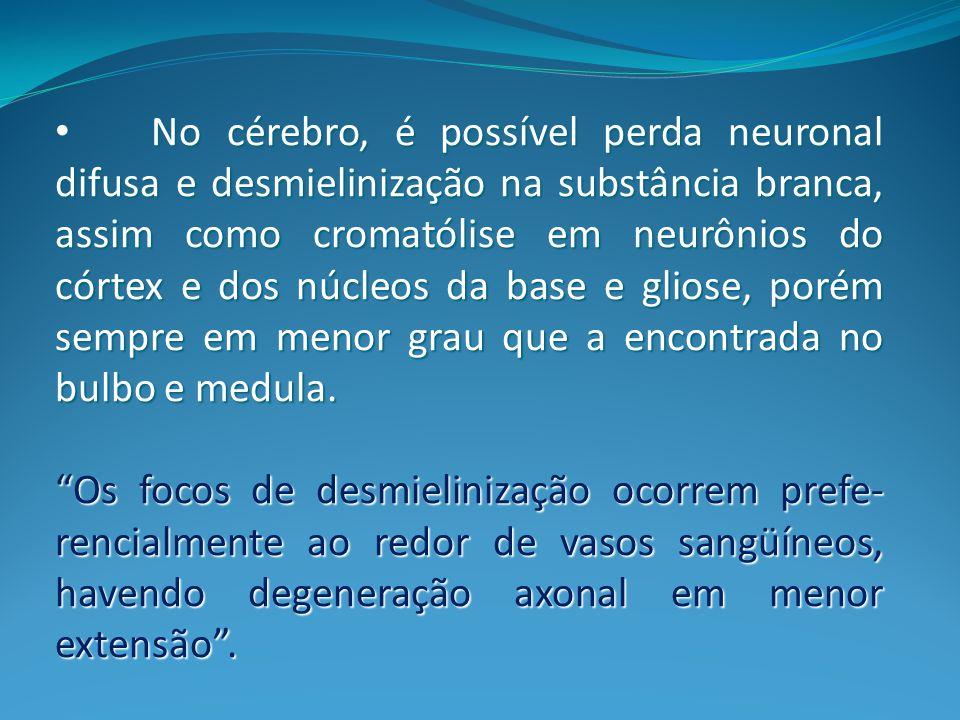 No cérebro, é possível perda neuronal difusa e desmielinização na substância branca, assim como cromatólise em neurônios do córtex e dos núcleos da base e gliose, porém sempre em menor grau que a encontrada no bulbo e medula.