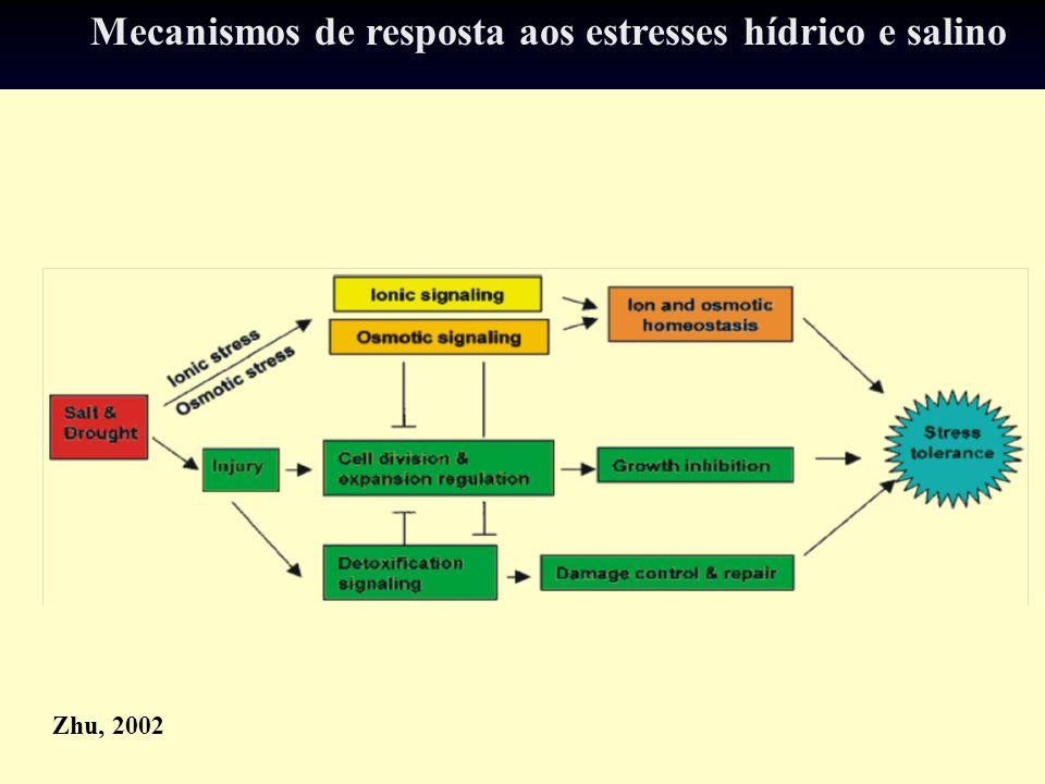 Mecanismos de resposta aos estresses hídrico e salino