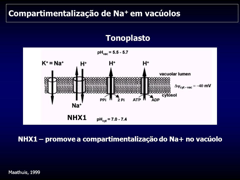 Compartimentalização de Na+ em vacúolos