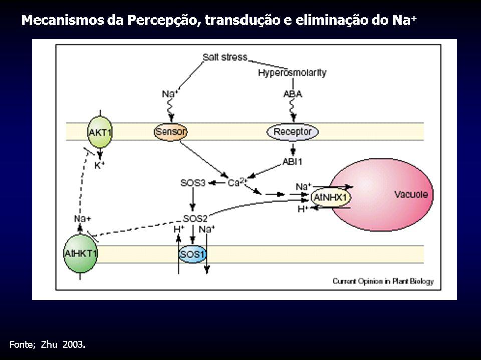 Mecanismos da Percepção, transdução e eliminação do Na+
