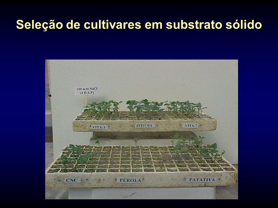 Seleção de cultivares em substrato sólido