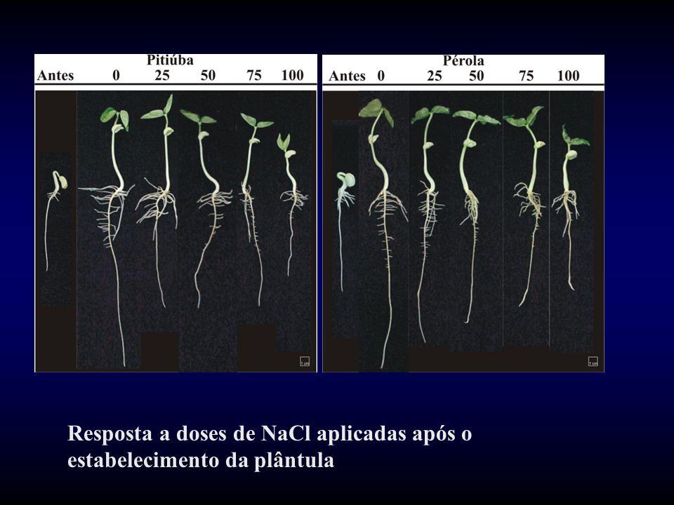 Resposta a doses de NaCl aplicadas após o estabelecimento da plântula
