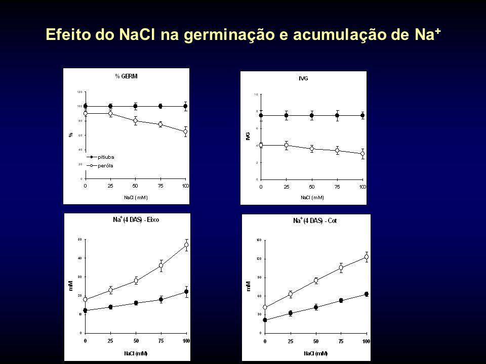 Efeito do NaCl na germinação e acumulação de Na+