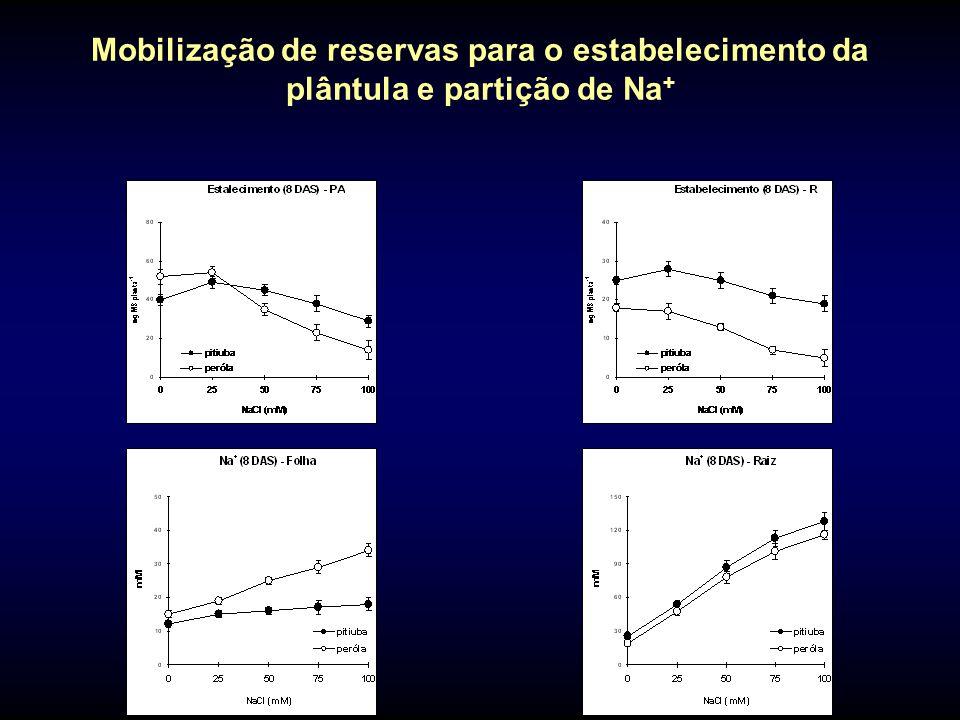 Mobilização de reservas para o estabelecimento da plântula e partição de Na+