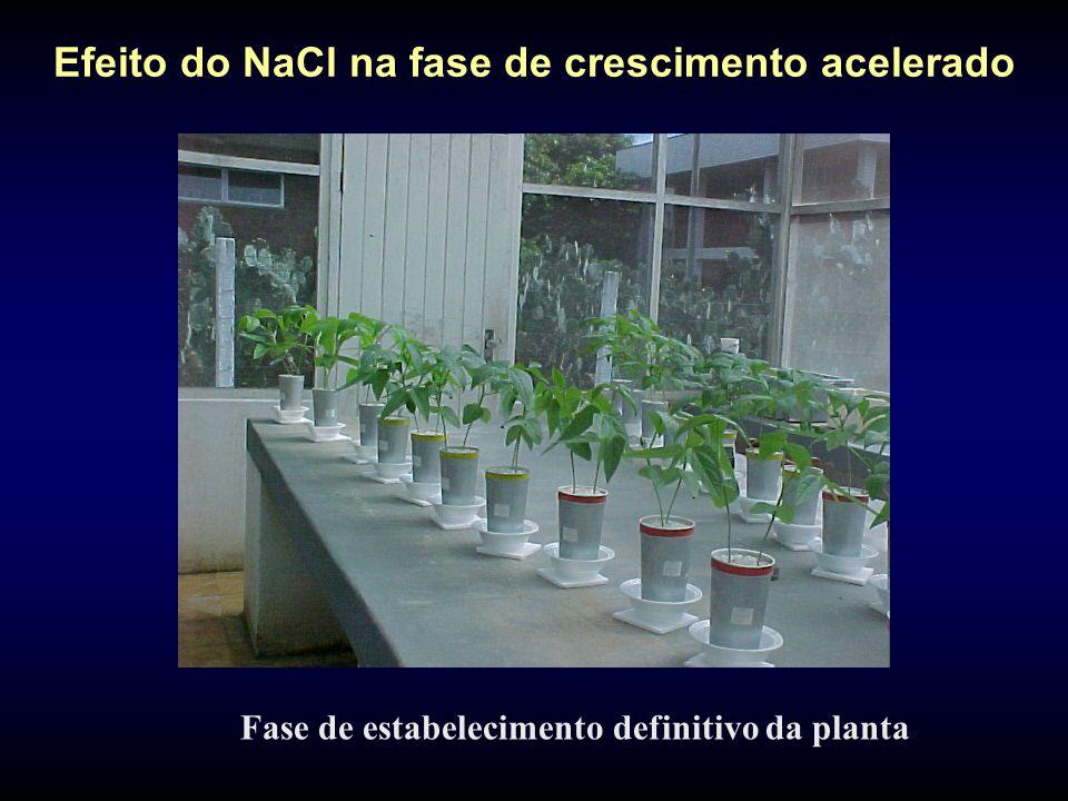 Efeito do NaCl na fase de crescimento acelerado