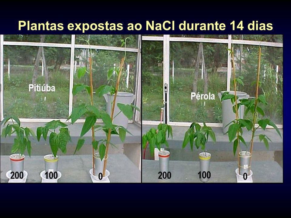 Plantas expostas ao NaCl durante 14 dias