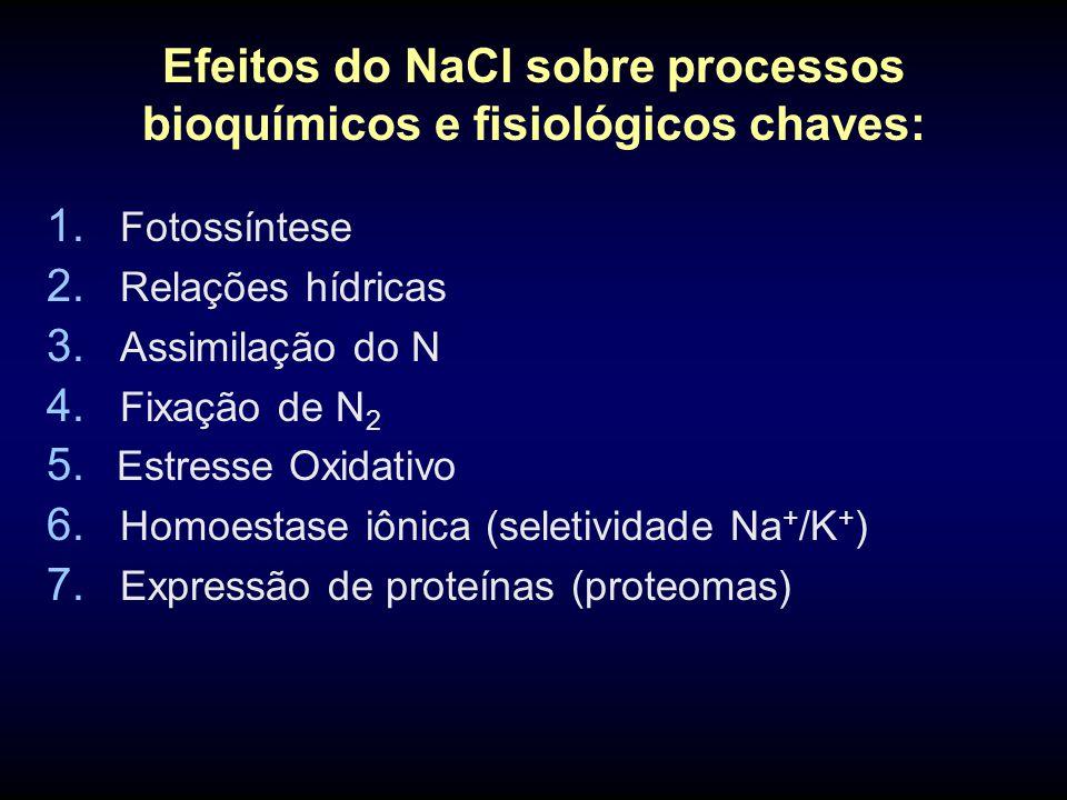 Efeitos do NaCl sobre processos bioquímicos e fisiológicos chaves: