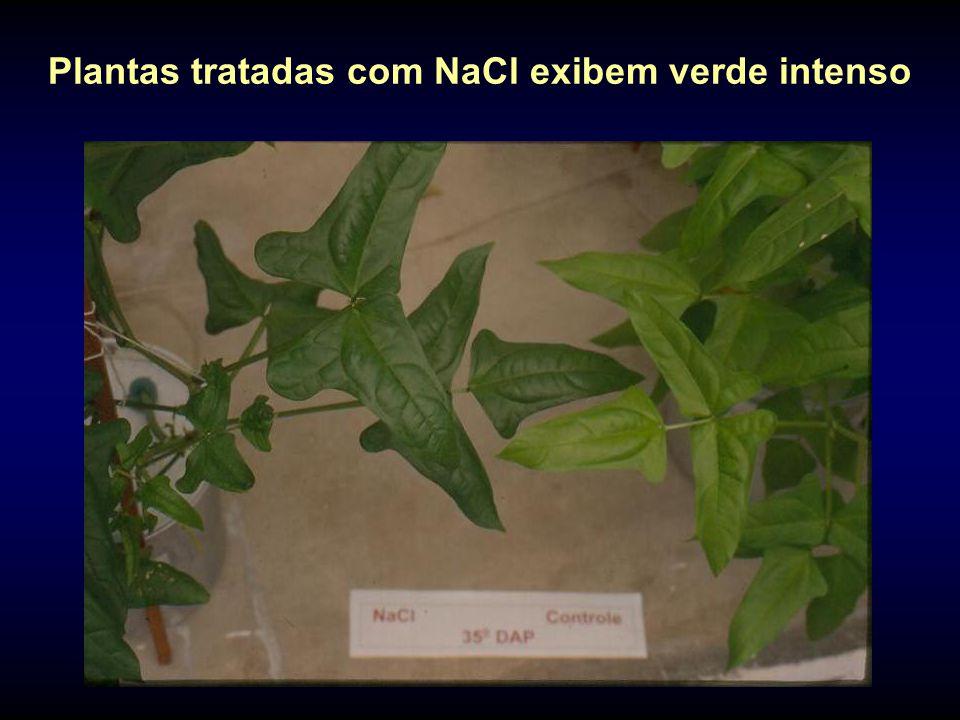 Plantas tratadas com NaCl exibem verde intenso