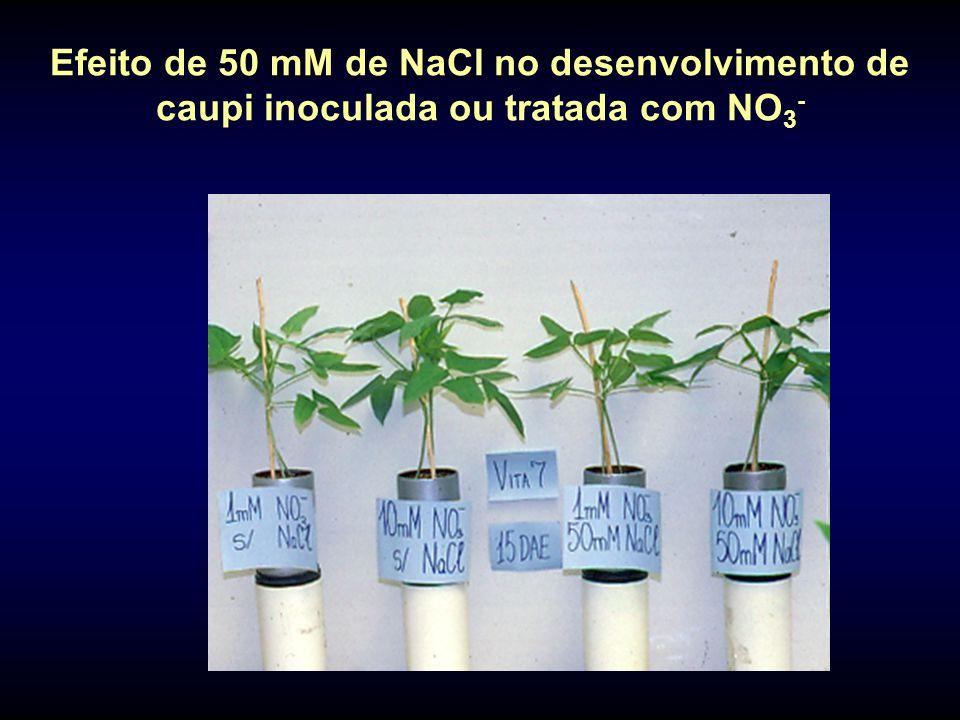 Efeito de 50 mM de NaCl no desenvolvimento de caupi inoculada ou tratada com NO3-