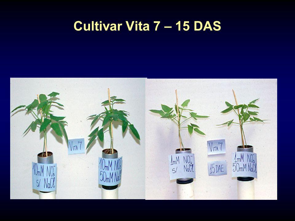 Cultivar Vita 7 – 15 DAS