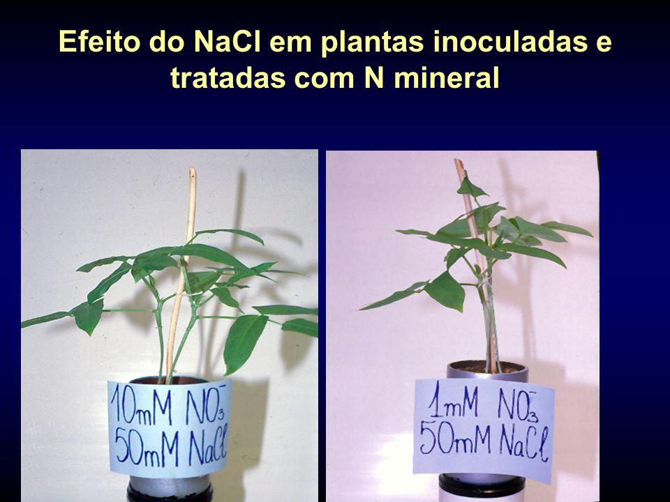 Efeito do NaCl em plantas inoculadas e tratadas com N mineral