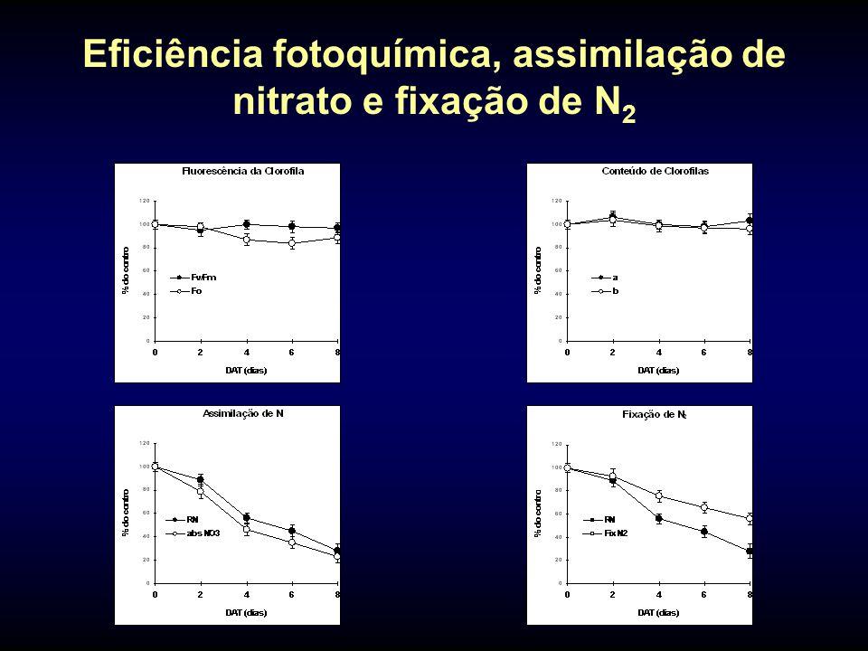 Eficiência fotoquímica, assimilação de nitrato e fixação de N2
