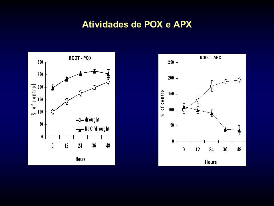 Atividades de POX e APX