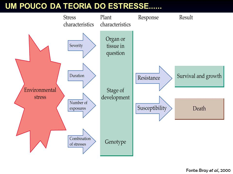 UM POUCO DA TEORIA DO ESTRESSE......