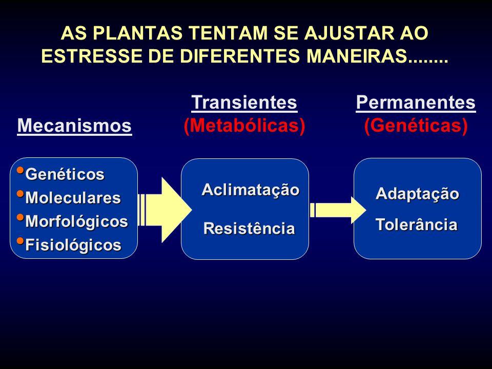 Transientes (Metabólicas) Permanentes (Genéticas)