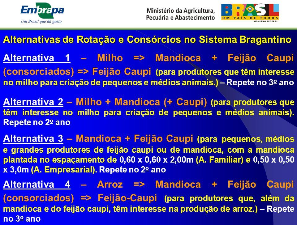 Alternativas de Rotação e Consórcios no Sistema Bragantino