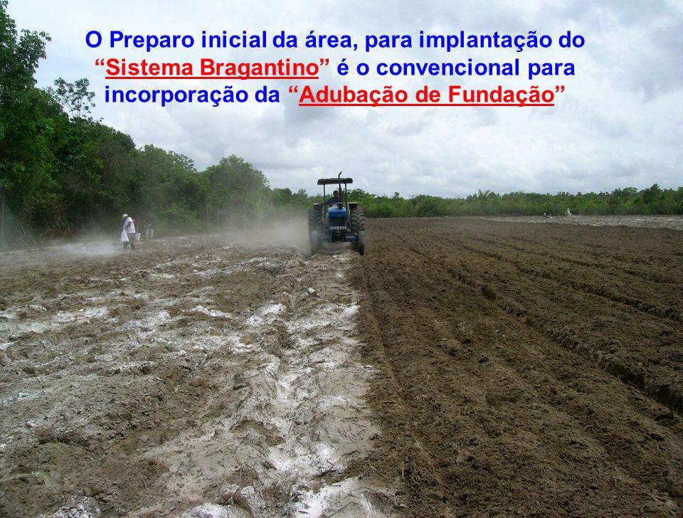 O Preparo inicial da área, para implantação do Sistema Bragantino é o convencional para incorporação da Adubação de Fundação