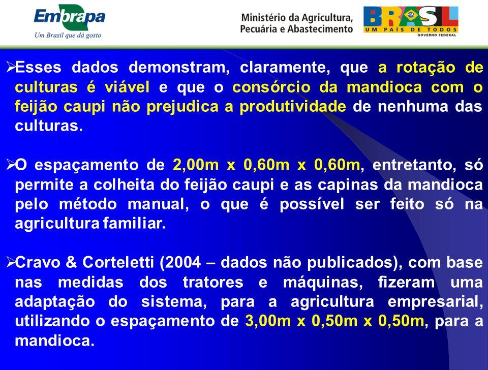 Esses dados demonstram, claramente, que a rotação de culturas é viável e que o consórcio da mandioca com o feijão caupi não prejudica a produtividade de nenhuma das culturas.