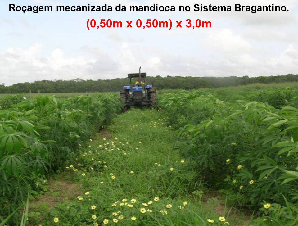 Roçagem mecanizada da mandioca no Sistema Bragantino.