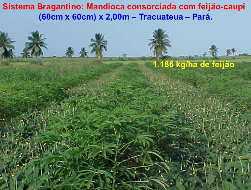 (60cm x 60cm) x 2,00m – Tracuateua – Pará.