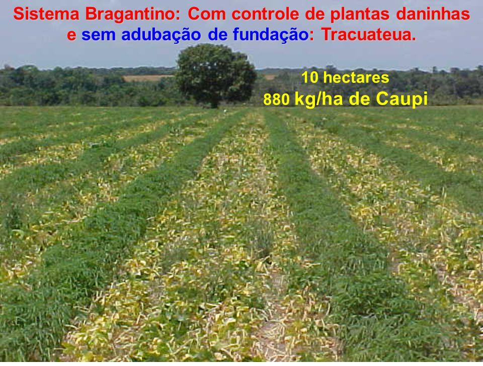 Sistema Bragantino: Com controle de plantas daninhas e sem adubação de fundação: Tracuateua.