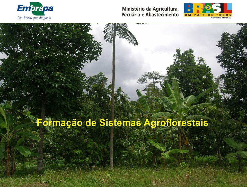 Formação de Sistemas Agroflorestais