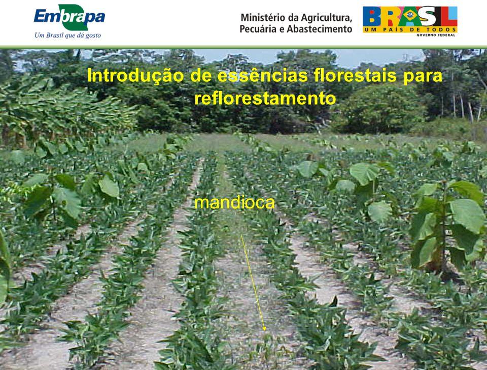 Introdução de essências florestais para reflorestamento