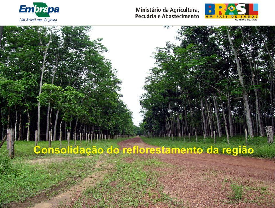 Consolidação do reflorestamento da região