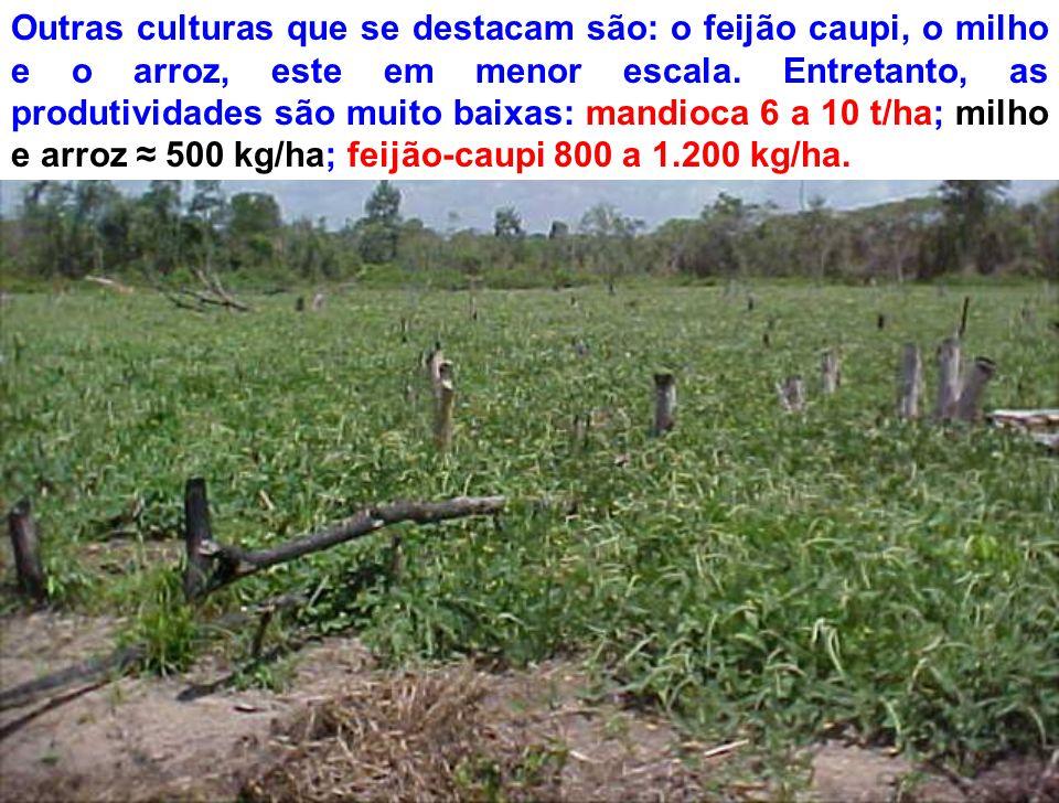 Outras culturas que se destacam são: o feijão caupi, o milho e o arroz, este em menor escala.