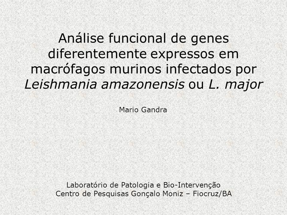 Análise funcional de genes diferentemente expressos em macrófagos murinos infectados por Leishmania amazonensis ou L. major