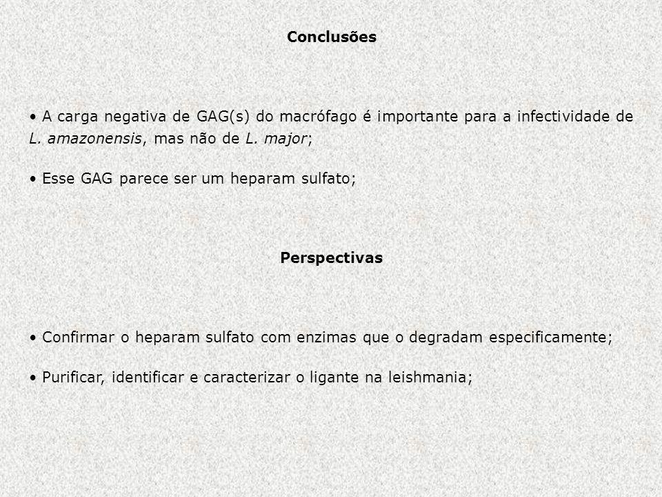 Conclusões A carga negativa de GAG(s) do macrófago é importante para a infectividade de L. amazonensis, mas não de L. major;