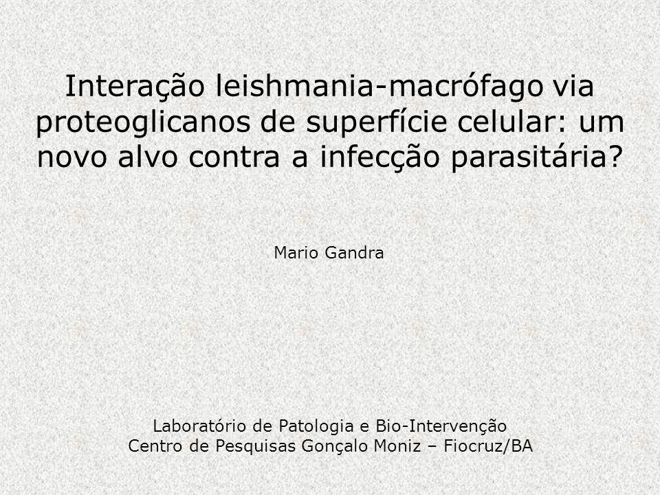 Interação leishmania-macrófago via proteoglicanos de superfície celular: um novo alvo contra a infecção parasitária