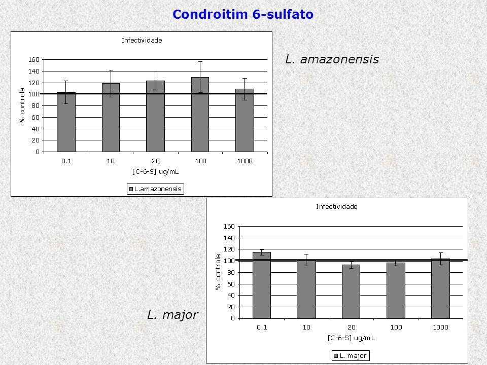 Condroitim 6-sulfato L. amazonensis L. major
