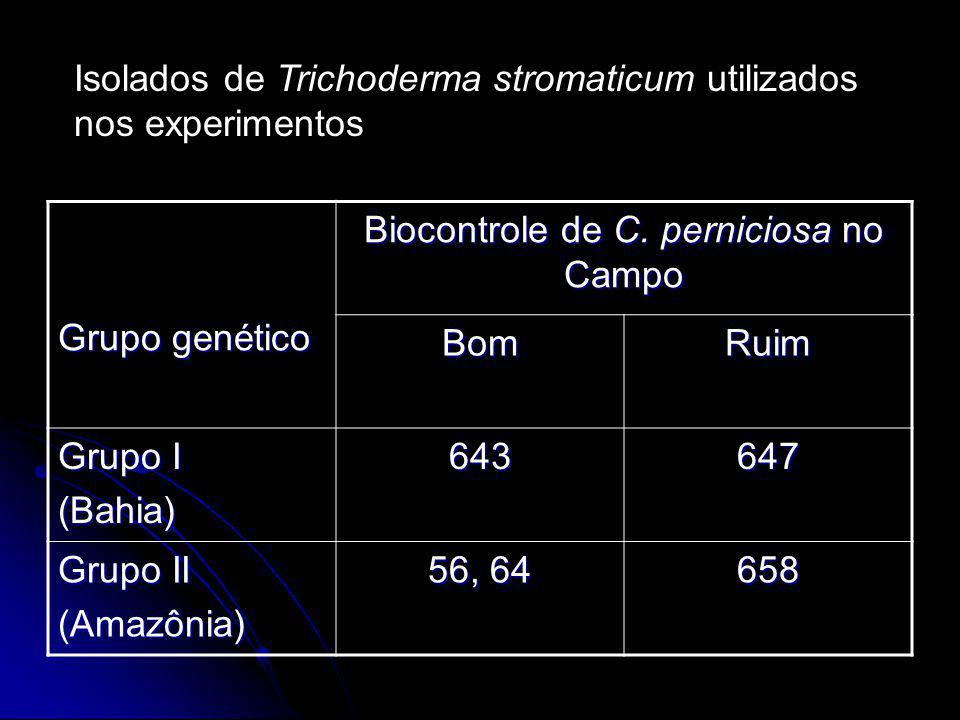 Biocontrole de C. perniciosa no Campo