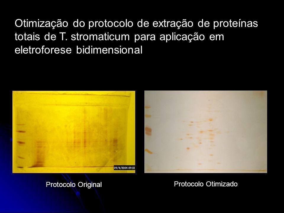 Otimização do protocolo de extração de proteínas totais de T