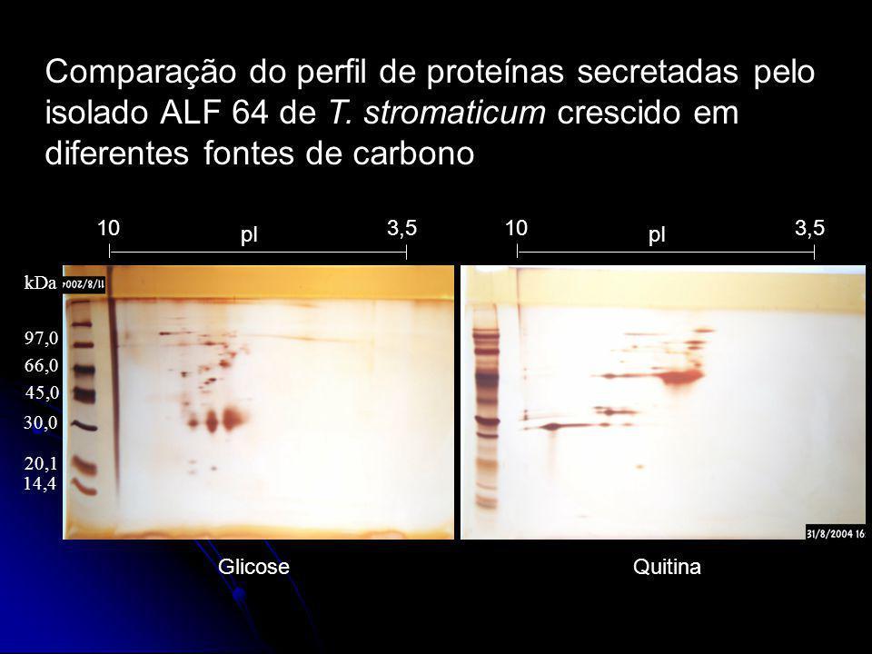 Comparação do perfil de proteínas secretadas pelo isolado ALF 64 de T