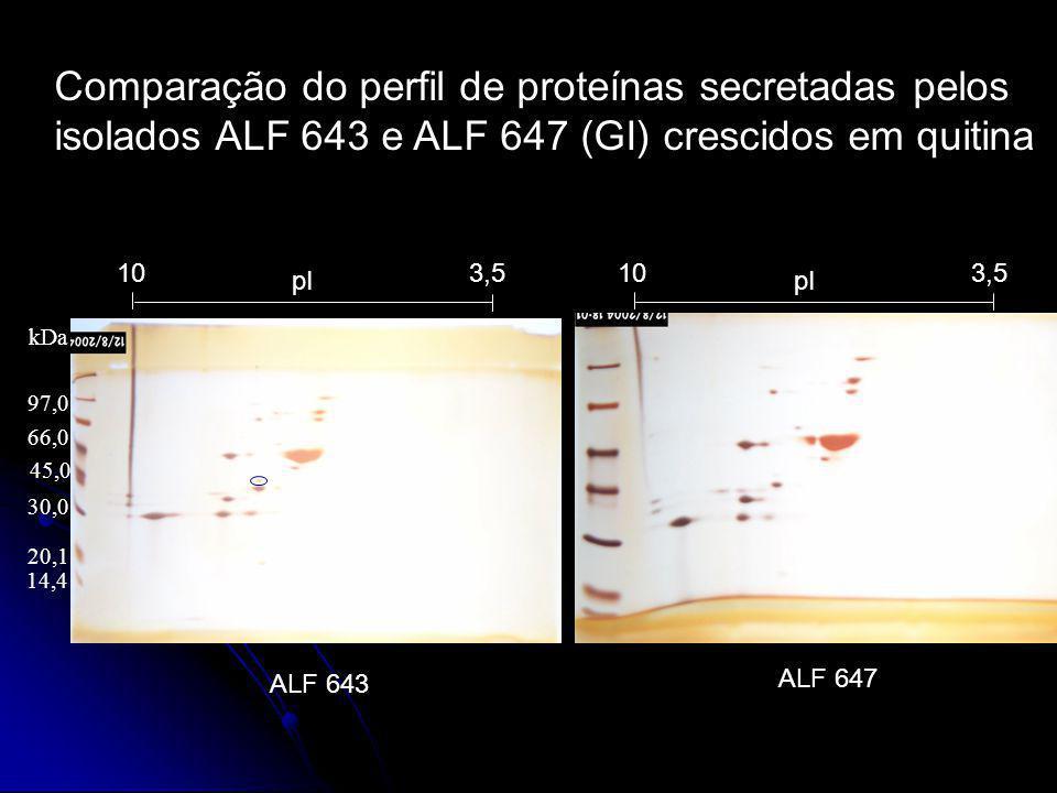 Comparação do perfil de proteínas secretadas pelos isolados ALF 643 e ALF 647 (GI) crescidos em quitina