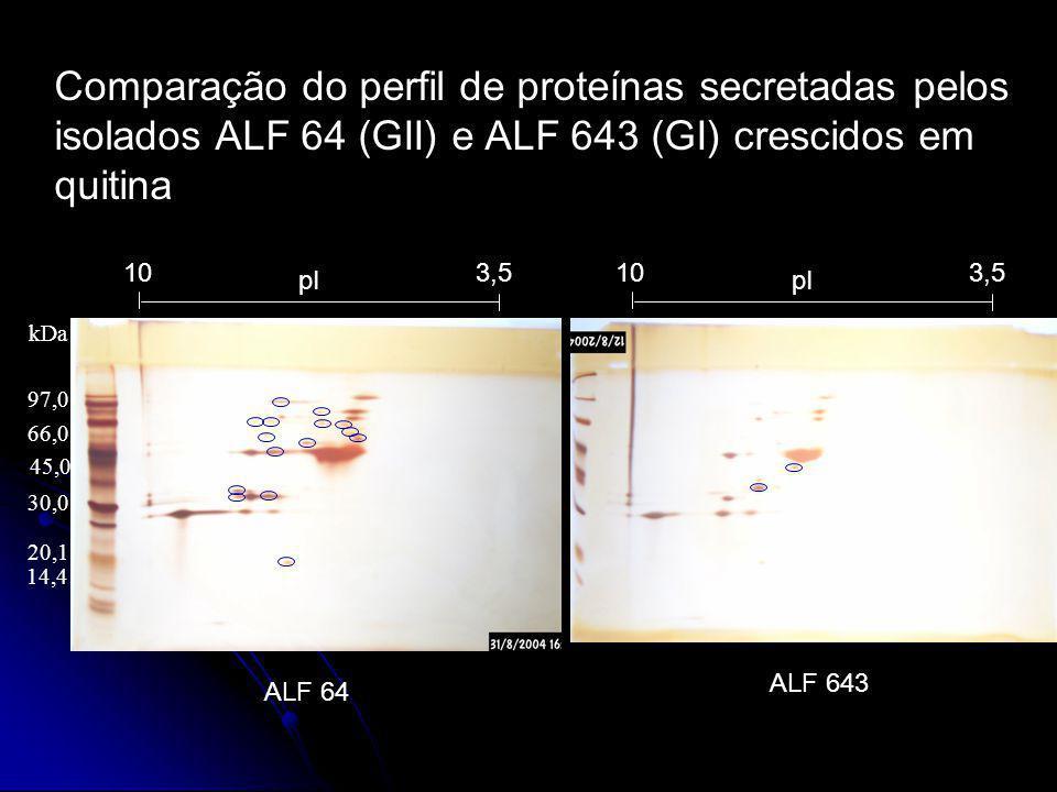 Comparação do perfil de proteínas secretadas pelos isolados ALF 64 (GII) e ALF 643 (GI) crescidos em quitina