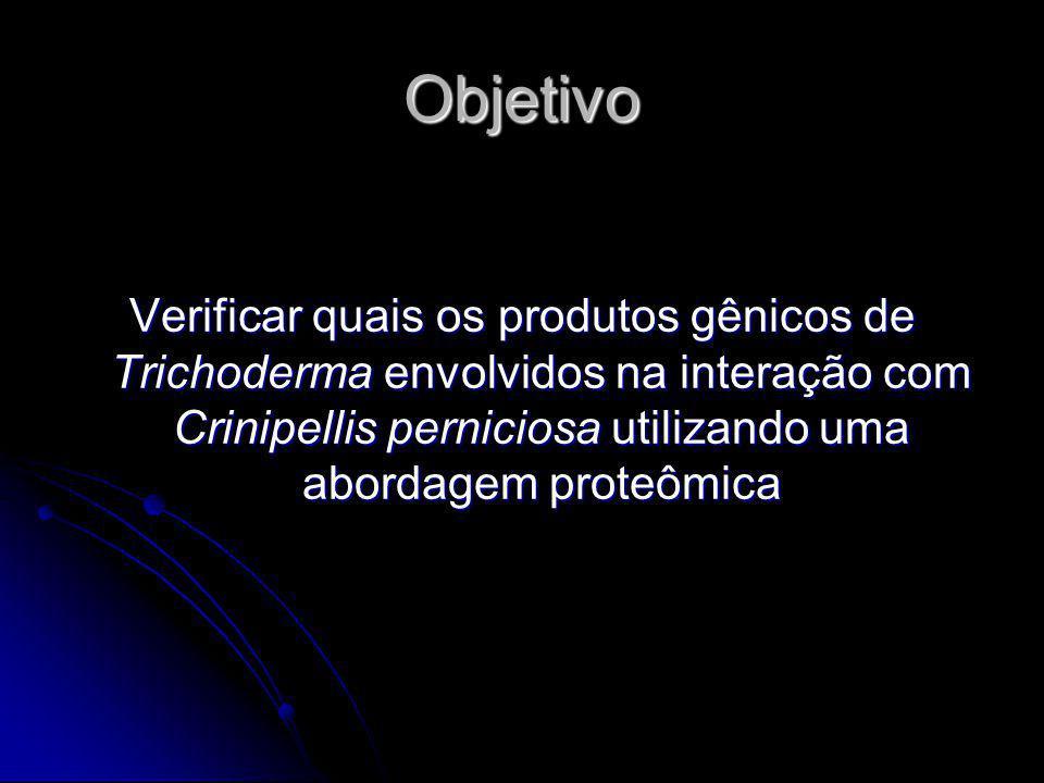 Objetivo Verificar quais os produtos gênicos de Trichoderma envolvidos na interação com Crinipellis perniciosa utilizando uma abordagem proteômica.