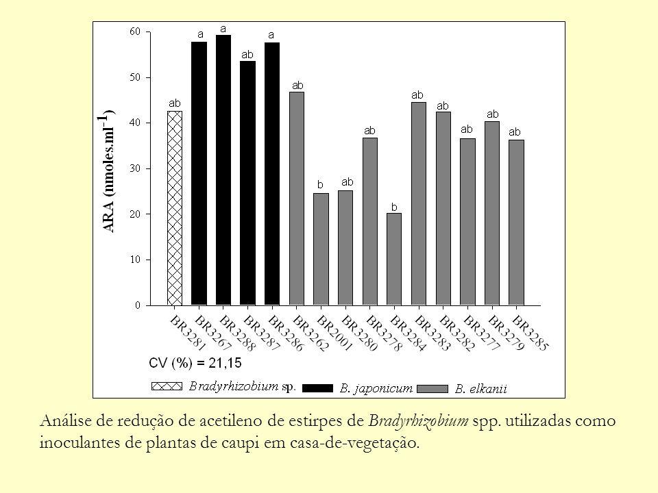 Análise de redução de acetileno de estirpes de Bradyrhizobium spp